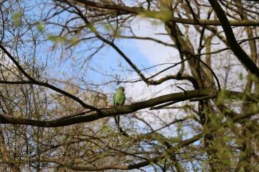 Wildlife in Vondelpark