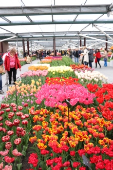 This giant greenhouse housed hundreds of different types of tulips and smelt incredibly!